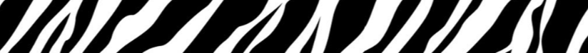 bande-zebre1